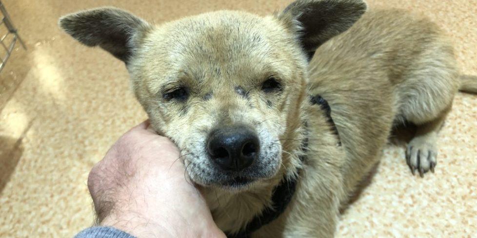 Jenny – Blind, Abandoned Dog – Safe Now